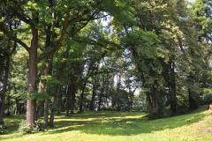 23. park dworski w Sredniej Wsi